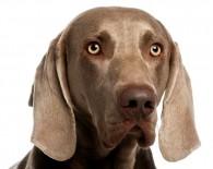 Dog_oncologynews_800x600