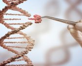 Splicing factor to blame in triple negative breast cancer