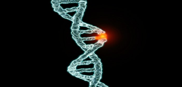 Increased risk of prostate cancer in men with BRCA2 gene fault