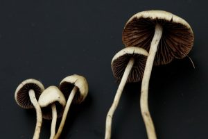 Psilocybin magic mushrooms dark background_oncology news australia