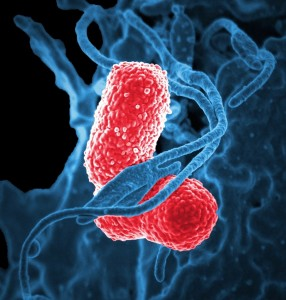 bacteria red green microbiology microbes_oncology news australia