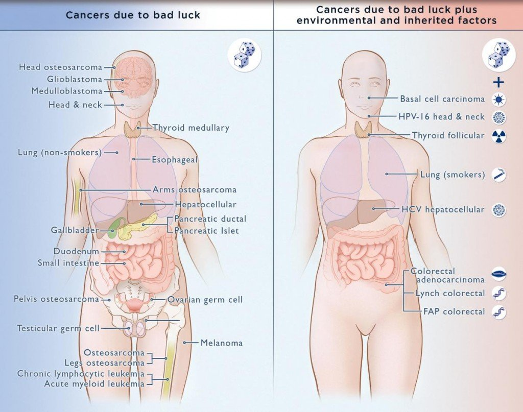 cancers due to bad luck plus environmental factors