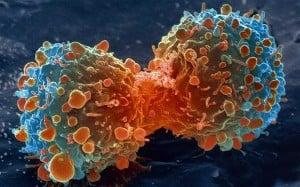 cell cancer_oncologynews.com.au