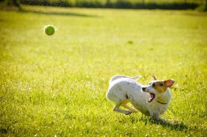 dog ball park outdoor_oncology news australia