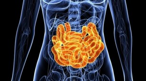 gut bacteria microbiome concept colon_oncology news australia