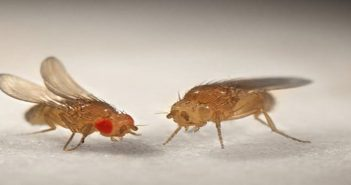 Study identifies two proteins that suppress tumour growth in fruit flies, suggests similar effect on human cancers