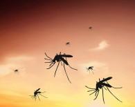 malaria mosquito oncology news australia 800x700