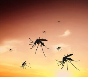 malaria mosquito oncology news australia 800x700