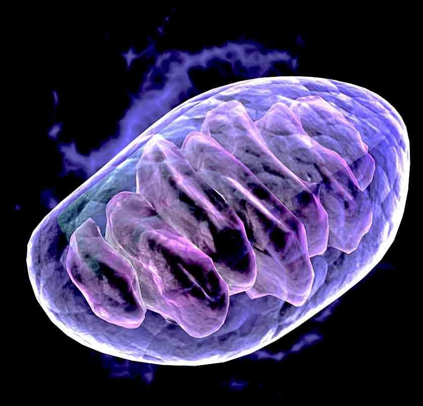 mitochondria oncologynews