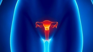 ovaries fallopian tubes cervix_female reproductive system_oncology news australia