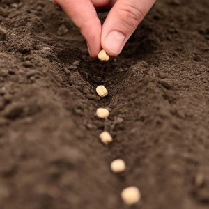 planting seeds in soil_oncology news australia