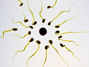 sperm concept_fertility_oncology news australia