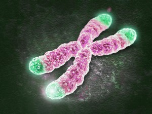 telomeres-chromosome-oncology news australia